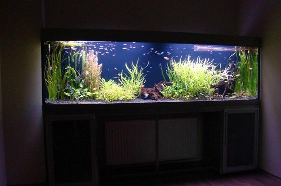 Как установить аквариум