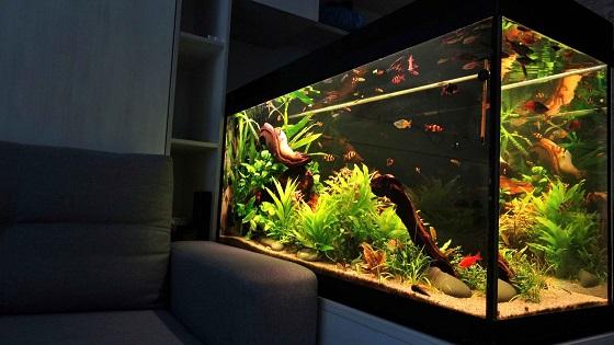 Удобное расположение аквариума в комнате