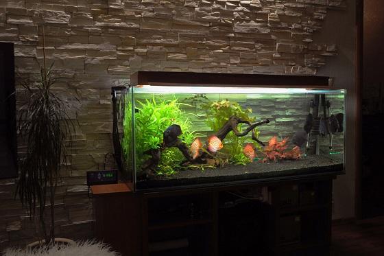 Правильная установка аквариума в комнате
