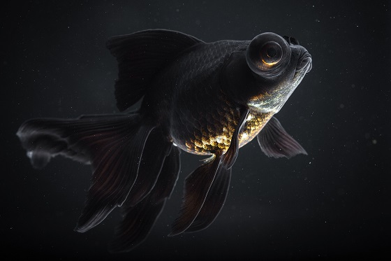 Рыба черный телескоп